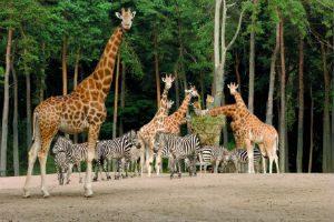 royal-burgers-zoo-safari-netherlands