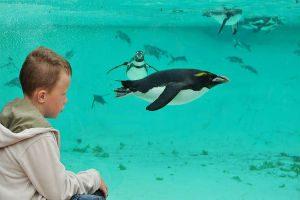 zsl-london-zoo-underwater-penguin-for-web